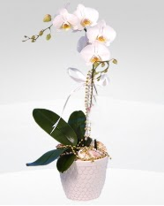 1 dallı orkide saksı çiçeği  Eskişehir online çiçekçi , çiçek siparişi