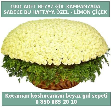 1001 adet beyaz gül sepeti özel kampanyada  Eskişehir çiçek gönderme sitemiz güvenlidir