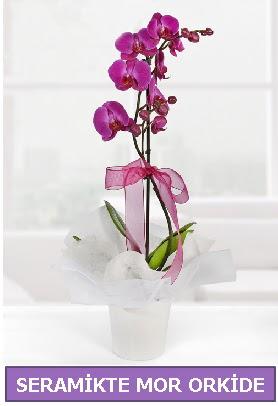 Seramik içerisinde birinci kalite tek dallı mor orkide  Eskişehir İnternetten çiçek siparişi