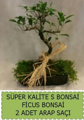 Ficus S Bonsai ve arap saçı  Eskişehir çiçekçi telefonları