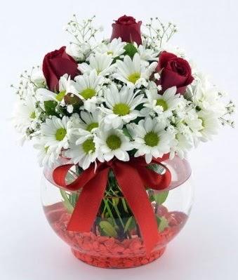 Fanusta 3 Gül ve Papatya  Eskişehir internetten çiçek satışı