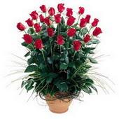 Eskişehir uluslararası çiçek gönderme  10 adet kirmizi gül cam yada mika vazo