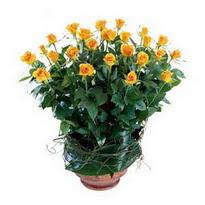 Eskişehir cicekciler , cicek siparisi  10 adet sari gül tanzim cam yada mika vazoda çiçek