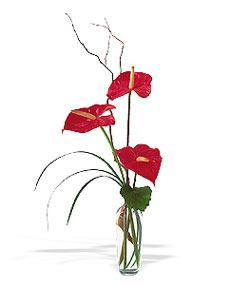 Eskişehir çiçek siparişi sitesi  cam yada mika Vazoda 3 adet  antoryum