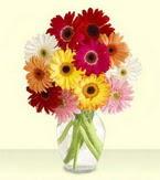 Eskişehir çiçek yolla , çiçek gönder , çiçekçi   cam yada mika vazoda 15 özel gerbera