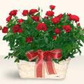 Eskişehir İnternetten çiçek siparişi  11 adet kirmizi gül sepette