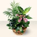 Eskişehir çiçek satışı  5 adet canli çiçek sepette