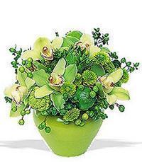cam yada mika vazoda 5 adet orkide   Eskişehir online çiçekçi , çiçek siparişi
