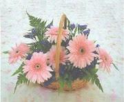 gerbera çiçeklerinde sepet   Eskişehir çiçek yolla