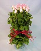 13 adet pembe gül silindirde   Eskişehir çiçek yolla