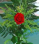 1 adet kirmizi gül buketi   Eskişehir çiçek siparişi vermek