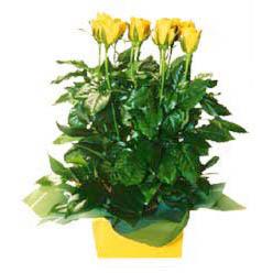 11 adet sari gül aranjmani  Eskişehir online çiçekçi , çiçek siparişi