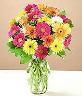 Eskişehir çiçek online çiçek siparişi  17 adet karisik gerbera