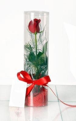 Eskişehir çiçek yolla  Silindir vazoda tek kirmizi gül