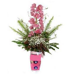 Eskişehir hediye çiçek yolla  cam yada mika vazo içerisinde tek dal orkide çiçegi