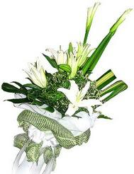 Eskişehir güvenli kaliteli hızlı çiçek  3 dal kazablanka çiçegi ve yesillikler