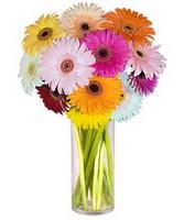 Eskişehir internetten çiçek siparişi  Farkli renklerde 15 adet gerbera çiçegi