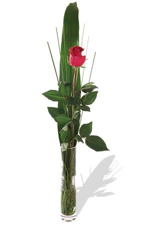 1 adet cam vazo içerisinde kirmizi gül  Eskişehir çiçek , çiçekçi , çiçekçilik