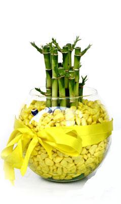 cam fanus içerisinde bambo  Eskişehir internetten çiçek satışı