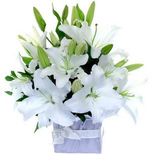 Eskişehir çiçek yolla  2 dal cazablanca vazo çiçeği