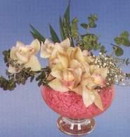 Eskişehir çiçek mağazası , çiçekçi adresleri  Dal orkide kalite bir hediye