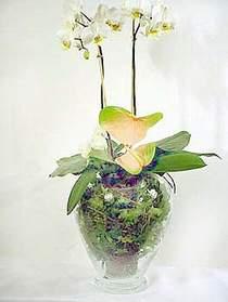 Eskişehir çiçek satışı  Cam yada mika vazoda özel orkideler