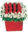 Eskişehir çiçek gönderme  Kare cam yada mika içinde kirmizi güller - anneler günü seçimi özel çiçek