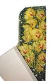Eskişehir çiçek gönderme  Kutu içerisine dal cymbidium orkide