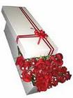Eskişehir çiçekçi telefonları  11 adet 1.kalite magnum güller