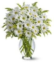 Vazo içerisinde beyaz krizantem çiçekleri  Eskişehir çiçekçi mağazası