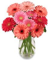 vazo içerisinde 13 adet gerbera çiçeği  Eskişehir çiçek siparişi sitesi