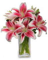 Vazo içerisinde 5 dal kazablanka çiçeği  Eskişehir cicekciler , cicek siparisi