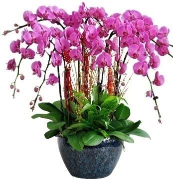 9 dallı mor orkide  Eskişehir 14 şubat sevgililer günü çiçek