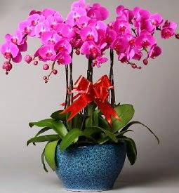 7 dallı mor orkide  Eskişehir çiçek online çiçek siparişi