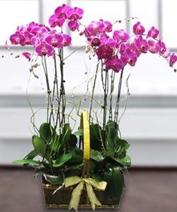 4 dallı mor orkide  Eskişehir güvenli kaliteli hızlı çiçek