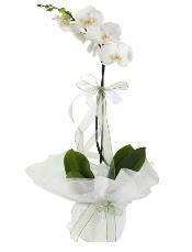 1 dal beyaz orkide çiçeği  Eskişehir çiçek siparişi vermek