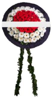 mozele çiçeği  Eskişehir hediye sevgilime hediye çiçek