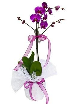 Tek dallı mor orkide  Eskişehir çiçekçi telefonları