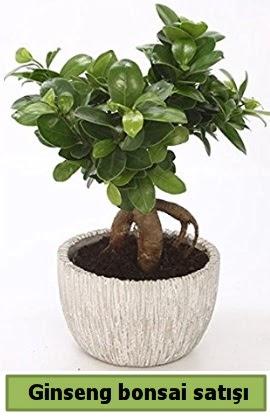 Ginseng bonsai japon ağacı satışı  Eskişehir çiçekçi telefonları