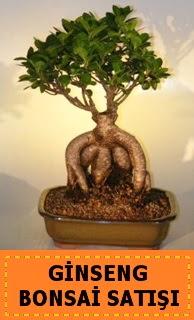 Ginseng bonsai satışı japon ağacı  Eskişehir cicek , cicekci