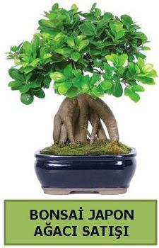 Bonsai japon ağacı satışı  Eskişehir çiçek satışı