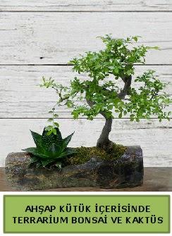 Ahşap kütük bonsai kaktüs teraryum  Eskişehir internetten çiçek siparişi