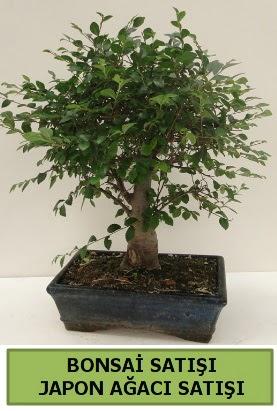 Minyatür bonsai japon ağacı satışı  Eskişehir çiçek gönderme sitemiz güvenlidir