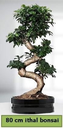 80 cm özel saksıda bonsai bitkisi  Eskişehir çiçekçi telefonları