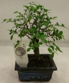 Minyatür ithal japon ağacı bonsai bitkisi  Eskişehir çiçek satışı