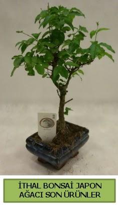 İthal bonsai japon ağacı bitkisi  Eskişehir hediye sevgilime hediye çiçek