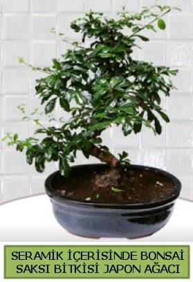 Seramik vazoda bonsai japon ağacı bitkisi  Eskişehir çiçek siparişi sitesi
