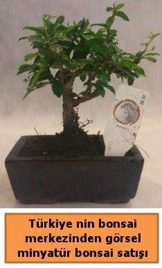 Japon ağacı bonsai satışı ithal görsel  Eskişehir çiçek yolla