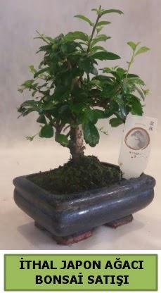 İthal japon ağacı bonsai bitkisi satışı  Eskişehir çiçekçi telefonları
