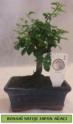 Minyatür bonsai ağacı satışı  Eskişehir çiçek gönderme